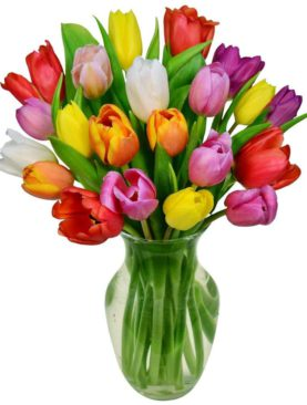20 MULTICOLOUR TULIPS